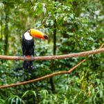 Toucan sesized