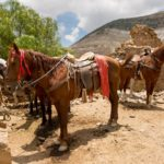 Horses Real de Catorce Mexico, Shutterstock