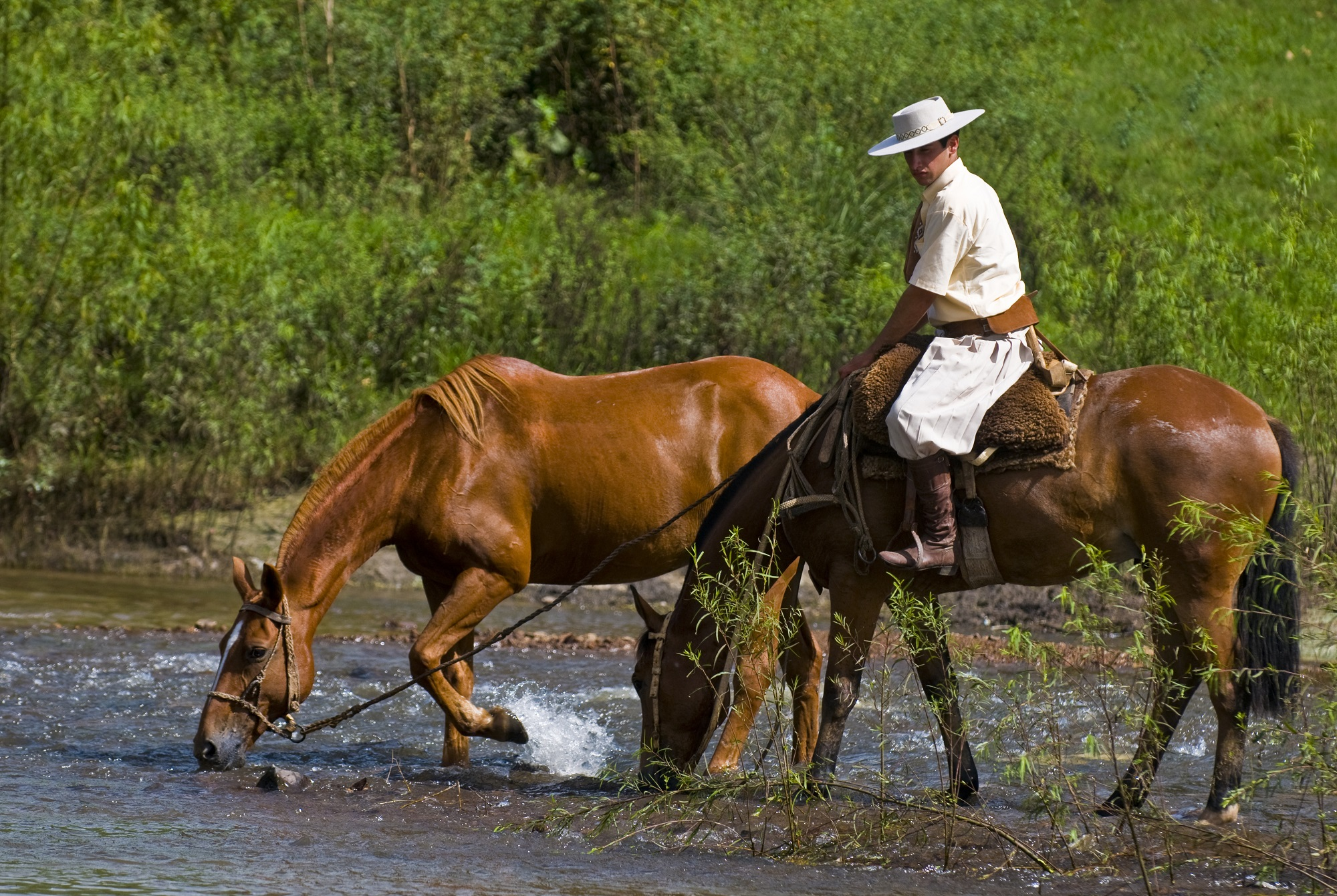Horse In Latin 8 Incredible Places Fo...