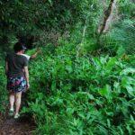 brazil-trail-hike